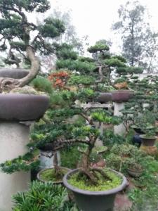 亚洲城,ca88亚洲城娱乐 - 亚洲城官网_松树